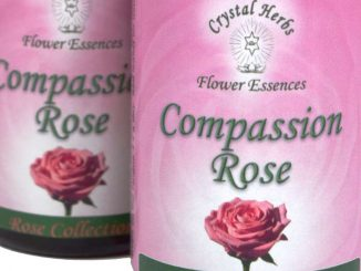 Compassion Rose Flower Essence