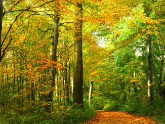 October-Autumn-Landscape