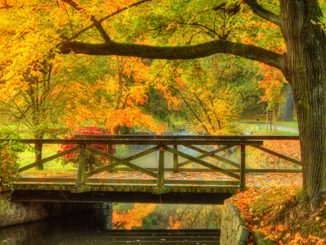 Bridge in autumn Landscape